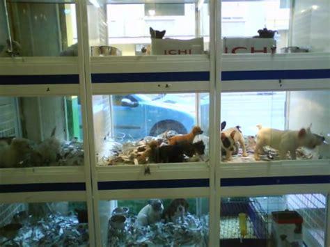 pacma denuncia  dos tiendas de animales de madrid