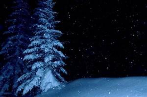 Pine Tree Forest Snow Night | www.imgkid.com - The Image ...