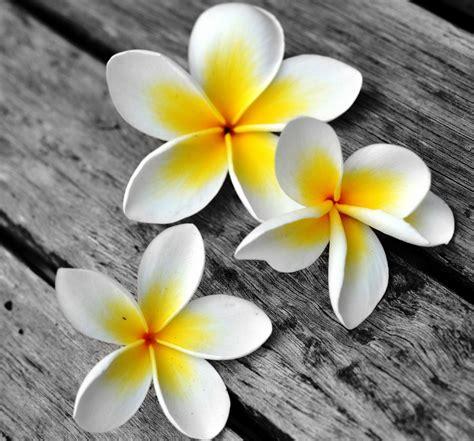kumpulan gambar bunga  indah animasi lucu bergerak