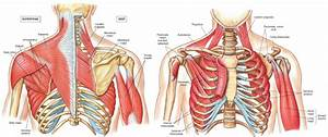 Print Kaap 309 Chapter 10 Muscles To Know Flashcards