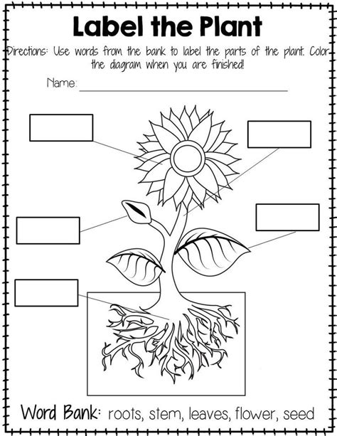 plant labeling worksheet freebie teach your students