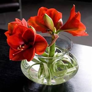 Amaryllis In Wachs Selber Machen : amaryllis flowers blumen blumen schmuck und deko blumen ~ Orissabook.com Haus und Dekorationen