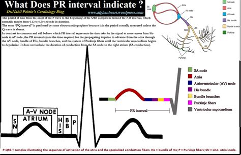 pr normal range 28 images pafmj pediatric research table 4 for article spectral analysis of