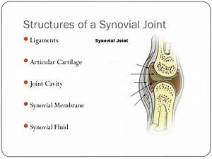 Structure Of A Synovial Joint And Effects Of Exercise On