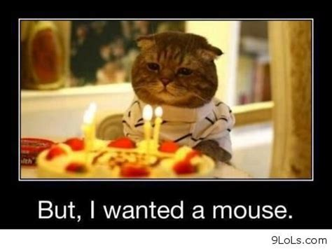 funny mouse quotes quotesgram