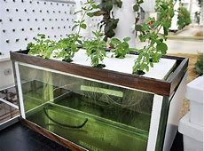 Advantages of Hydroponic Gardening Hydroponic Grow Shops