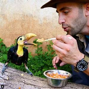 47 best Coyote Peterson/Brave Wilderness images on ...
