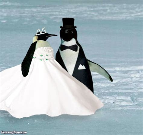 dress my penguin wedding in the arctic pictures