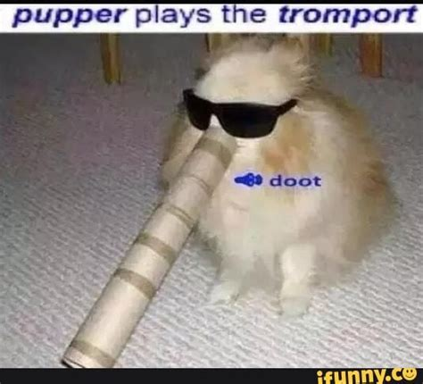 Pupper Memes - doggo memes google search funny stuff pinterest cats plays and the o jays