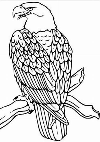 Eagle Coloring Pages Drawing Bald Patterns Bird