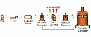 Reducing Variability In Cell