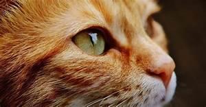 10 Caracter U00edsticas Del Gato