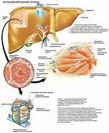 Препарат для лечения печени индия