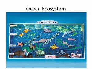 Ocean Ecosystem Drawing at GetDrawings | Free download