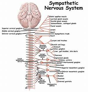 15 best images about Neuro Disorders on Pinterest ...