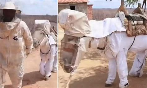 worlds  beekeeping donkey   suit  protect