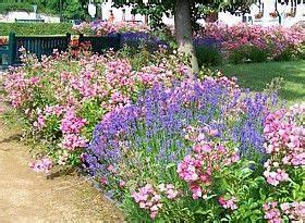 Lavendel Wann Schneiden : echter lavendel duftlavendel pflege schneiden wichtige tipps gardens garten garten ~ One.caynefoto.club Haus und Dekorationen