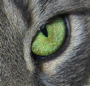 cat s eye file cats eye jpg
