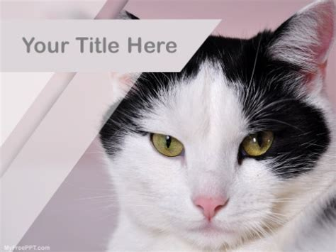 Cruelty Free Kitty Template For by Free Cute Powerpoint Templates Myfreeppt