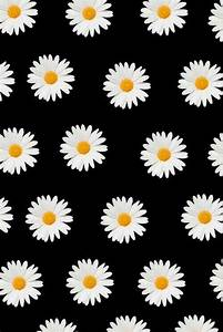 2015, background, daisies, flowers, pattern, screen ...