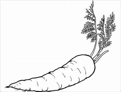 Gambar Wortel Sketsa Mewarnai Untuk Sayuran Kumpulan