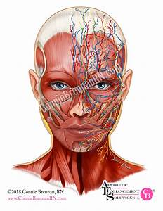 Facial Anatomy  Considerations For Aesthetic Providers On