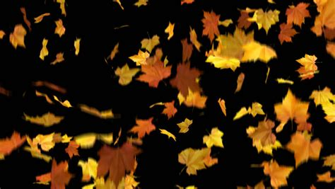 Falling Leaves Wallpaper Animated - falling leaves looped and masked 3d animation stock