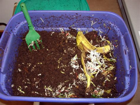 worm composting  vermicomposting msu extension