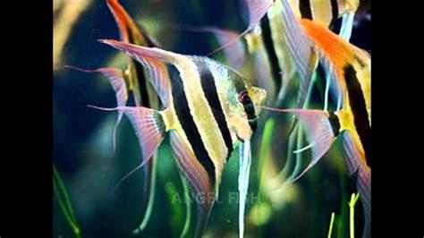 common types  freshwater aquarium fish youtube