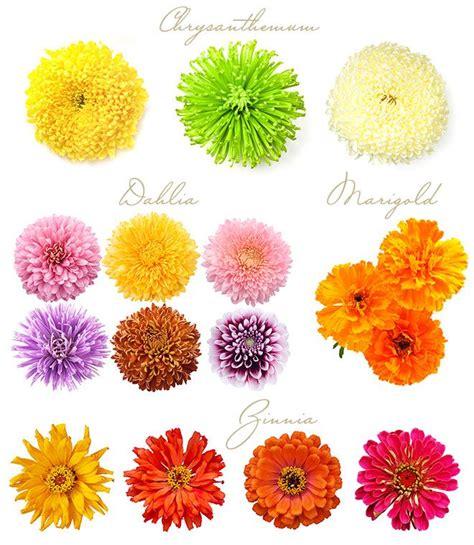 flowers in season fall flowers in season www imgkid com the image kid has it