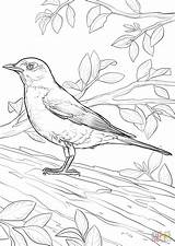 Coloring Robin Pages American Printable Crafts Bird State Drawing Wisconsin Dot sketch template