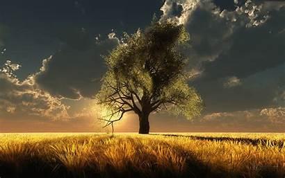 Tree Nature Wallpapers Trees Sun Sunshine July