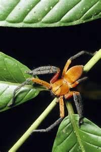 Amazon Rainforest Animals Spiders
