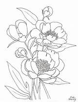 Peony Coloring Peonies Flower Printable Drawing Line Template Pink Flowers Getdrawings Getcolorings Sketch Hanging Shorey Eva sketch template