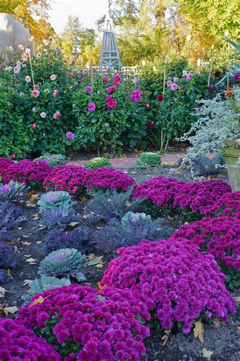 autumn garden flowers mums cabbage roses garden pinterest
