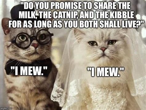 funny wedding meme askideascom