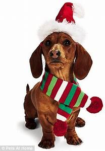 Pet t guide The best Christmas presents for dogs and