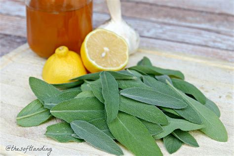 Antibacterial Antiviral Sage Honey Cough Syrup With
