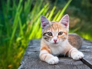 Was Brauchen Katzen : brauchen katzen freigang um gl cklich zu sein ~ Lizthompson.info Haus und Dekorationen