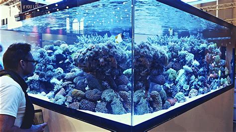 Aquascaping Ideas From Interzoo2016 Youtube
