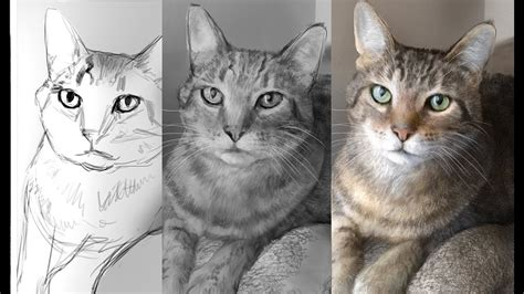 hyper realism digitally painting  cat  photoshop youtube