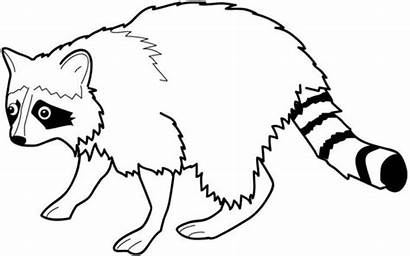 Coloring Raccoon Racoon Pages Printable Clipart Racoons