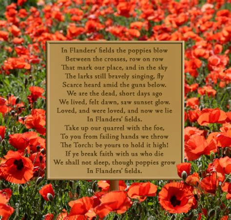 poppy poems for remembrance day remembrance day