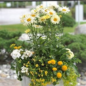 Die Schönsten Balkonpflanzen : beet balkonpflanzen seite 5 das gr ne medienhaus ~ Markanthonyermac.com Haus und Dekorationen