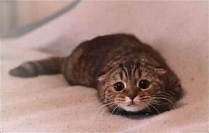 Sad Cat 2 – 1Funny.com