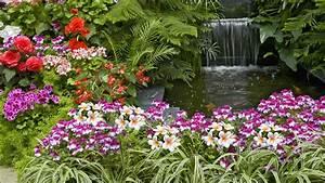 Flower Garden HD Desktop Background Wallpaper