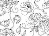 Peonies Coloring Pages Dribbble Floral sketch template