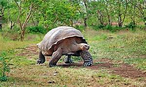 Galapagos Islands a natural selection for travelers who ...
