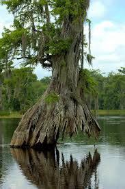 plants freshwater biome