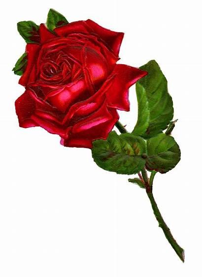 Rose Clip Flower Single Digital Clipart Antique
